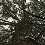 Tree (Copy)